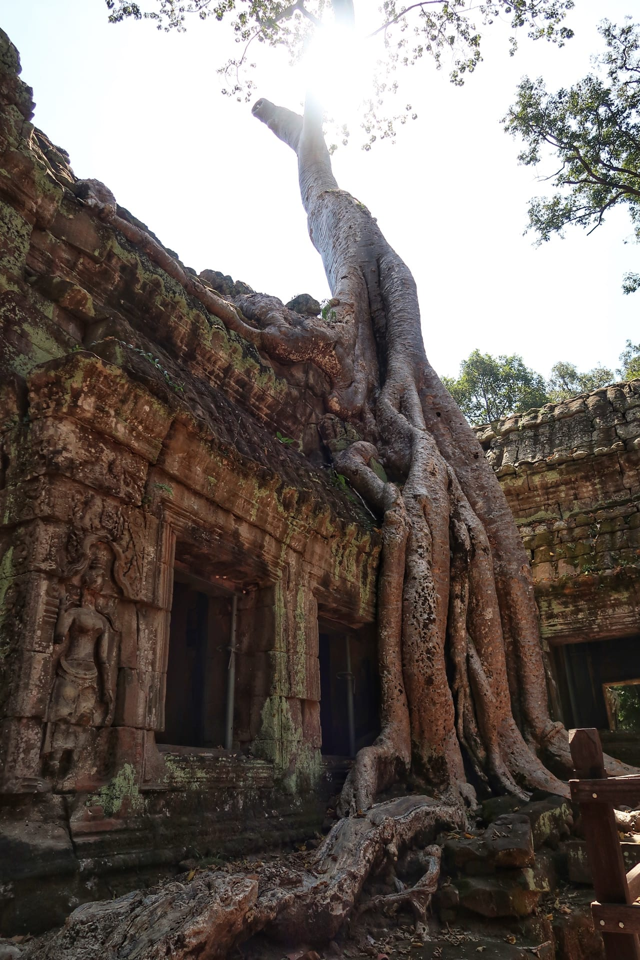 Angkor tempel rødder